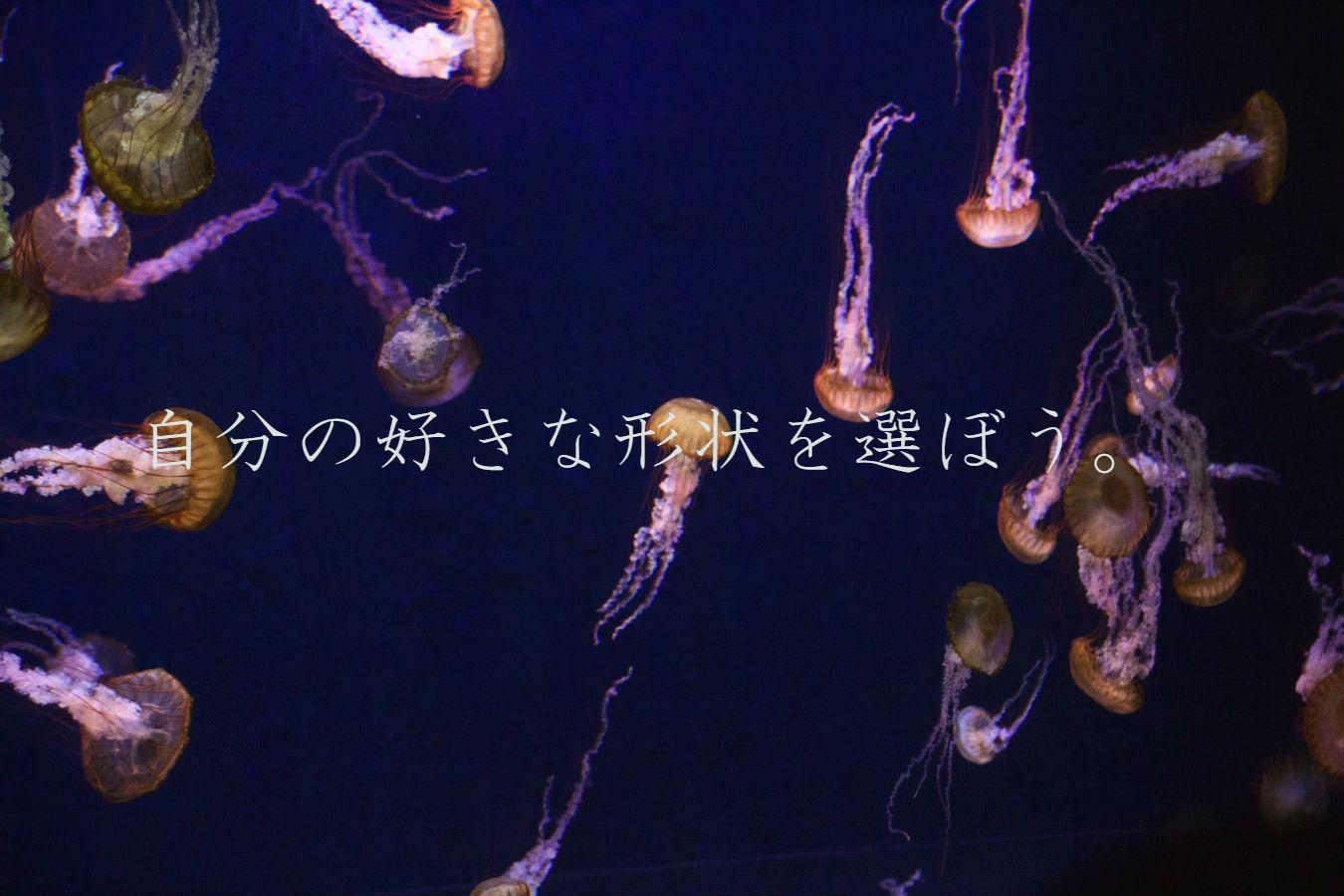 クラゲの画像